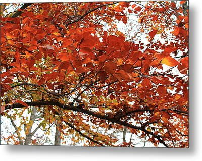 Metal Print featuring the photograph Autumn Beauty by Candice Trimble
