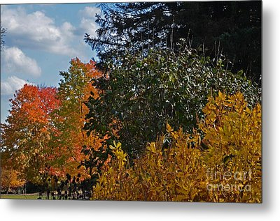 Metal Print featuring the photograph Autumn Beauty by Judy Wolinsky