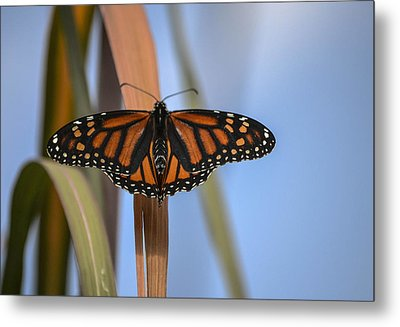 Autumn Beauty- Limited Edition 3 Of 10 Metal Print