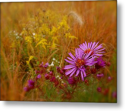 Autumn Blush Metal Print by Tim Good