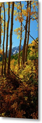 Autumn Brilliance 2 Metal Print by Jeremy Rhoades