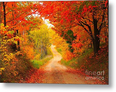 Metal Print featuring the photograph Autumn Cameo Road by Terri Gostola