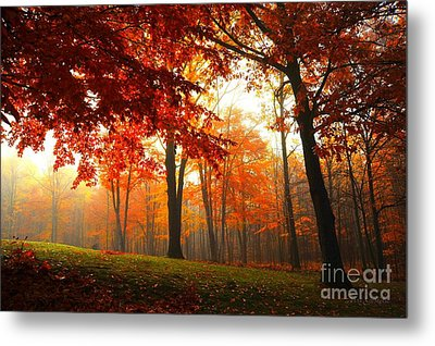 Metal Print featuring the photograph Autumn Canopy by Terri Gostola