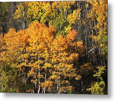 Autumn Color At The Continental Divide Metal Print