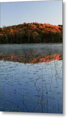Autumn Color Forest Reflected In Grass Metal Print by Panoramic Images