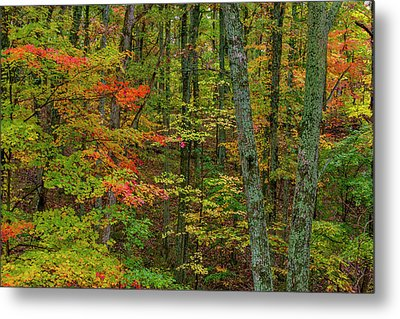 Autumn Color In Brown County State Metal Print by Chuck Haney
