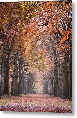 Metal Print featuring the photograph Autumn - Colorful Red Green Orange Nature Landscape Fine Art Photography by Artecco Fine Art Photography