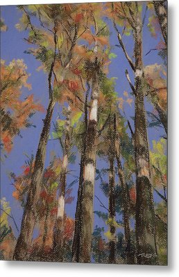 Autumn Colors Metal Print by Christopher Reid