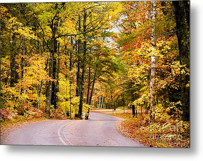 Autumn Colors - Colorful Fall Leaves Wisconsin - II Metal Print by David Perry Lawrence
