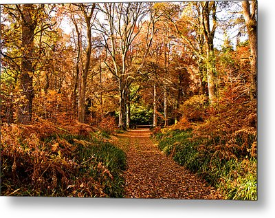 Autumn Colour Metal Print by Jacqi Elmslie