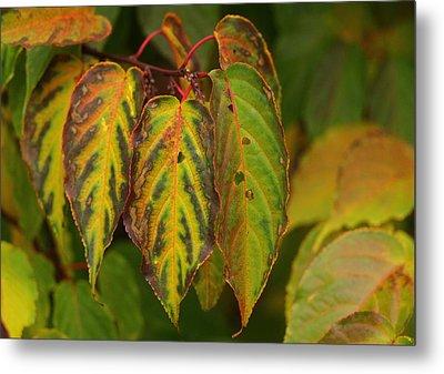 Autumn Colours Metal Print by Jacqui Collett