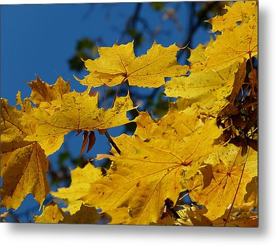 Metal Print featuring the photograph Autumn Colours by Janina  Suuronen