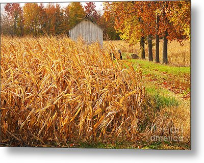 Metal Print featuring the photograph Autumn Corn by Mary Carol Story