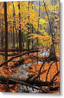 Metal Print featuring the photograph Autumn Creek In The Rain by Rodney Lee Williams