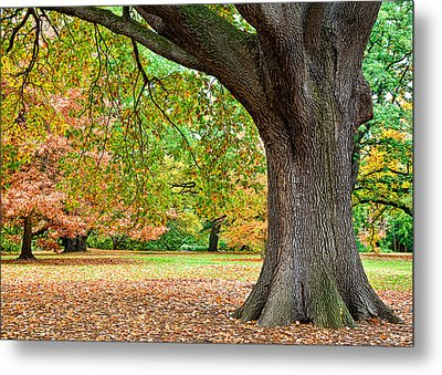 Autumn Metal Print by Dave Bowman
