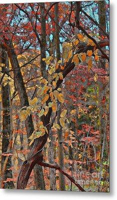Autumn Day Metal Print by Jeff Breiman