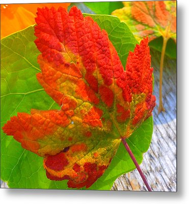 Autumn Delight Metal Print