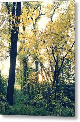 Autumn Evening Metal Print by Jessica Myscofski