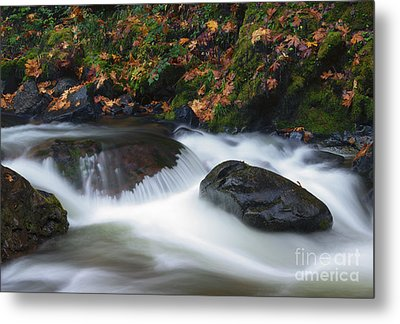 Autumn Fallen Metal Print