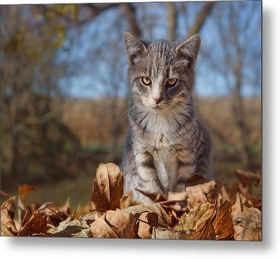 Autumn Farm Cat #2 - Horizontal Metal Print