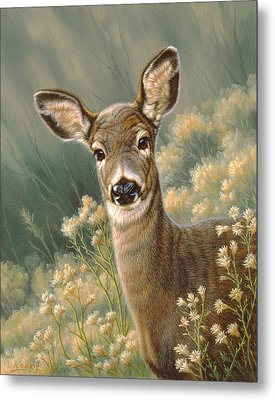 Autumn Fawn-blacktail Metal Print by Paul Krapf