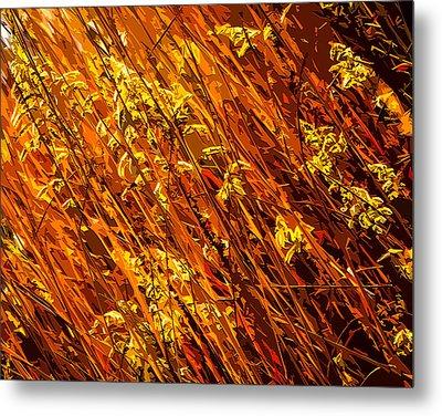 Autumn Field Metal Print by Brian Stevens
