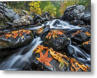 Autumn Flow Metal Print by Guy Schmickle