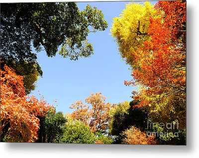 Autumn Forest Colors Metal Print by Boon Mee