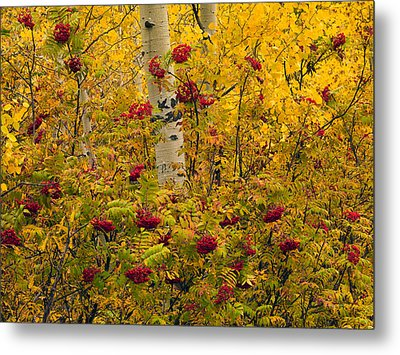 Autumn Forest Colors Metal Print by Leland D Howard