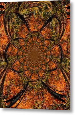 Autumn Forest Metal Print by Dan Sproul