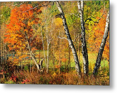 Autumn Forest Scene - Litchfield Hills Metal Print by Expressive Landscapes Fine Art Photography by Thom