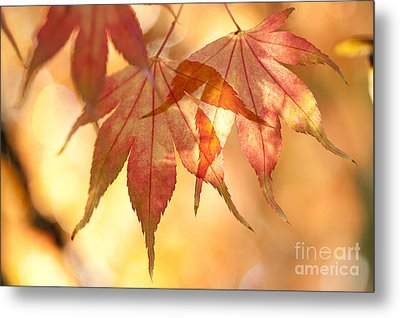 Autumn Glow Metal Print by Anne Gilbert