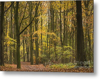 Autumn Gold Metal Print by Anne Gilbert