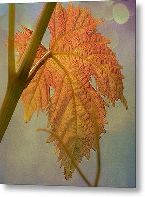 Autumn Grapevine Metal Print by Fraida Gutovich
