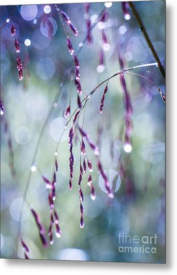 Autumn Grasses Metal Print by Amy Porter