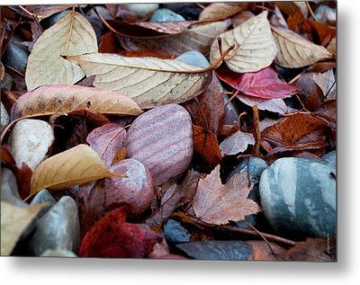 Autumn Greatness Metal Print by Gwyn Newcombe