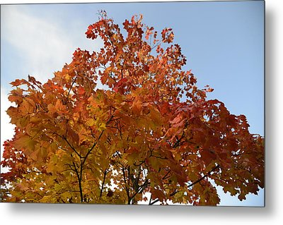 Autumn Harmony 1 Metal Print