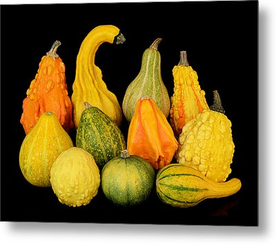 Autumn Harvest Gourds Metal Print by Jim Hughes