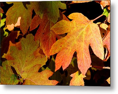 Autumn Hues Metal Print