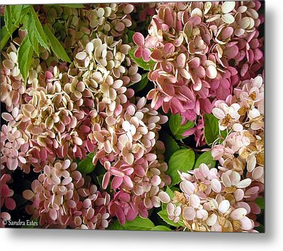 Metal Print featuring the photograph Autumn Hydrangeas by Sandra Estes