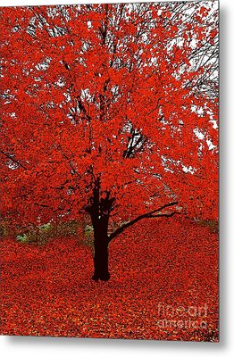 Red Tree Impressions #1 Red Metal Print by Saundra Myles