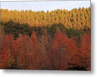 Autumn In Arcadia Metal Print by Sheryl Burns
