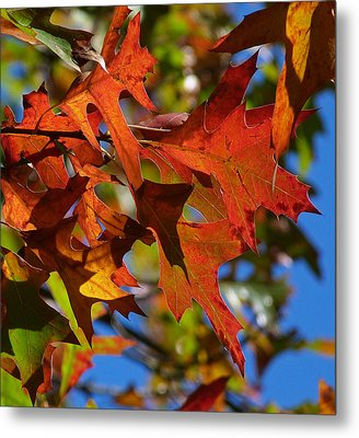 Autumn In Australia Metal Print by Margaret Saheed