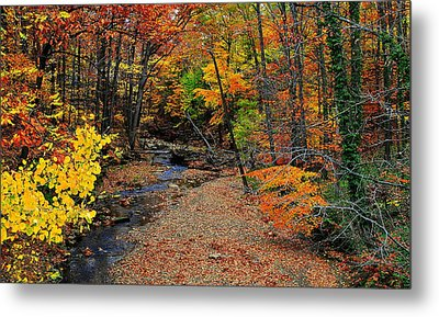 Autumn In Full Bloom Metal Print by Frozen in Time Fine Art Photography