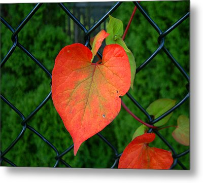 Autumn In July Metal Print by RC deWinter