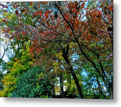 Autumn In Raleigh 009 Metal Print by Lance Vaughn