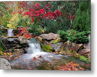 Autumn In The Botanic Gardens Metal Print by Martina Fagan