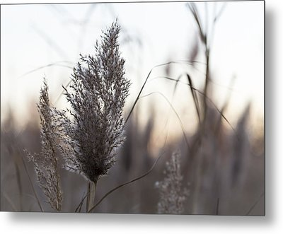 Metal Print featuring the photograph Autumn In The Tall Grass by Andrew Pacheco
