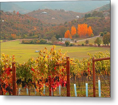 Metal Print featuring the photograph Autumn In The Valley by Brooks Garten Hauschild