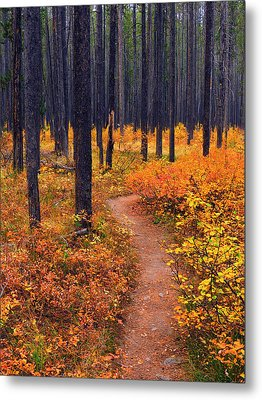 Autumn In Yellowstone Metal Print